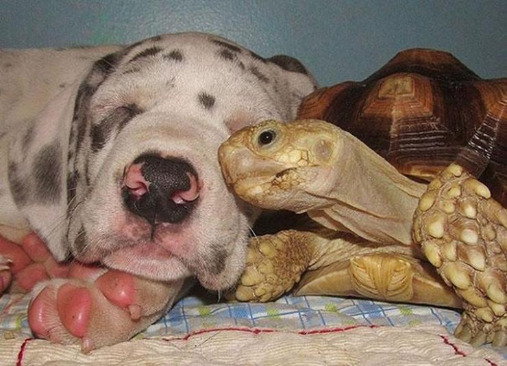 De belles images d'amitié - Page 2 740_espacebuzz546c996ea9647