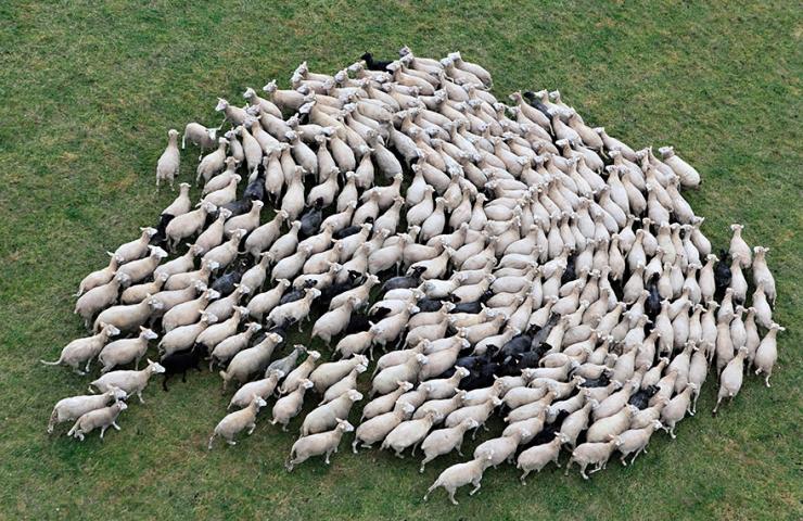 """Résultat de recherche d'images pour """"photo troupeau de moutons"""""""