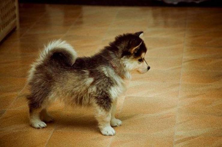 22 photos de jolis chiens issus de croisements
