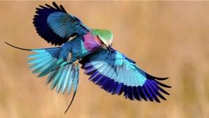 19 Especes D Oiseaux Peu Connues Une Veritable Mosaique Animale De Couleurs