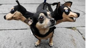 Image illustrant l'article 24 photos d'animaux déguisés qui vous feront sourire