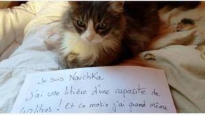 Image illustrant l'article La pancarte de la honte, LA solution quand nos chats adorés cumulent les conneries!