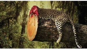 Image illustrant l'article Sensibilisation: Des affiches-chocs et incisives pour lutter efficacement contre la déforestation!