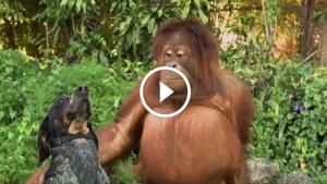 Image illustrant l'article Tout humain sur cette planète a besoin de voir cette courte vidéo!