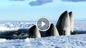 Image illustrant l'article Je n'ai jamais rien vu de plus beau sur la nature que cette vidéo de 2 min! Je pourrais la revoir indéfiniment.