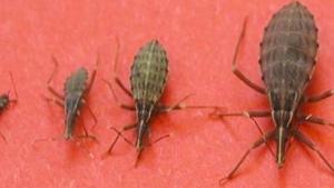 Image illustrant l'article Attention: Si vous prévoyez des vacances dans ces régions et que vous y voyez cet insecte, éloignez-vous rapidement!