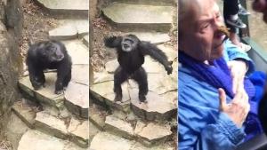 Image illustrant l'article Vu le caca qu'elle a reçu en pleine face, cette mamie n'ira surement plus voir des singes au Zoo... (Vidéo)