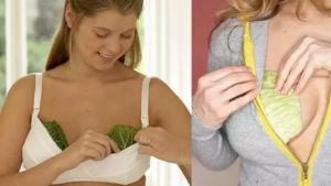 Image illustrant l'article C'est donc pour ça que les femmes mettent des feuilles de chou sur leurs seins. Surprenant mais bon à savoir!