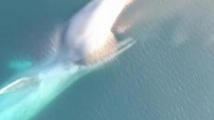 Image illustrant l'article Ils distinguent une forme énorme en filmant l'océan, ce qui sort de l'eau est fascinant, ne clignez pas des yeux!